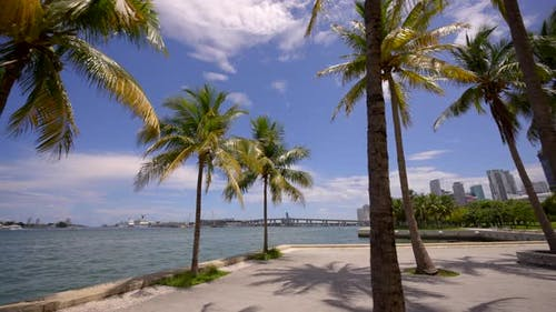Palms In The Park Miami 4k Footage