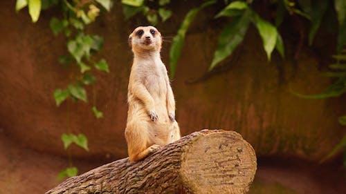 Standalone Meerkat