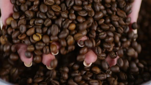 Thumbnail for Hands of Woman Touching Coffee Beans