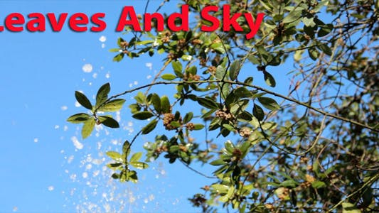 Thumbnail for Leaves And Sky