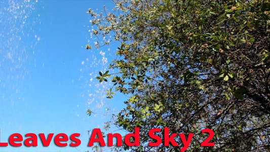 Thumbnail for Leaves And Sky 2
