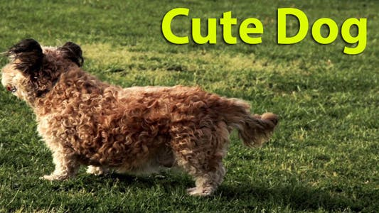 Thumbnail for Cute Dog I