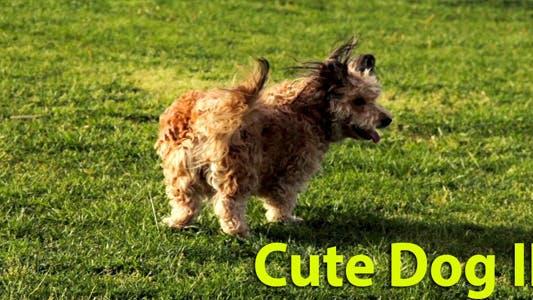 Thumbnail for Cute Dog II