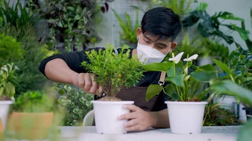 Portrait of a young asian male gardener planting tree in pot