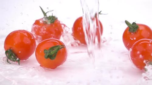 Water Splash on Tomatoes