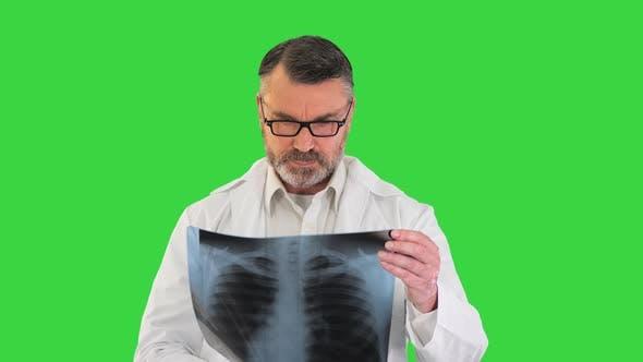 Arzt trägt Laborkittel, der das Röntgenbild der Lunge auf einem Greenscreen-Chroma-Key analysiert