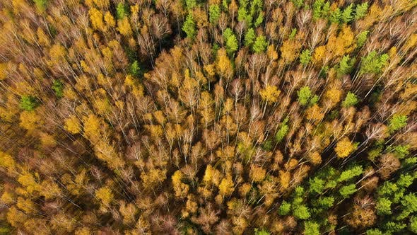 Thumbnail for Autumn Forest with Colorful Foliage