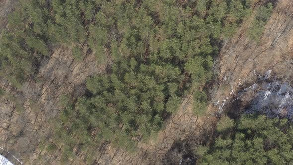 Thumbnail for Coniferous forest over the hill 4K drone video