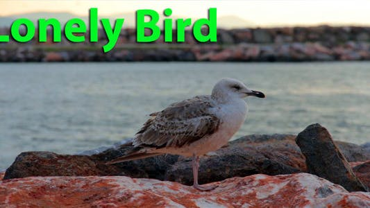 Thumbnail for Lonely Bird