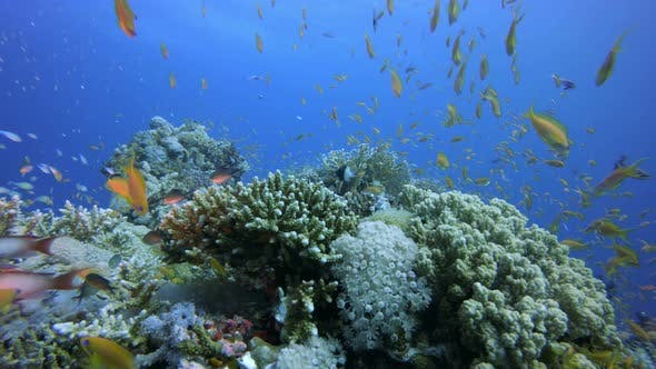 Thumbnail for Tropical Coral Reefs
