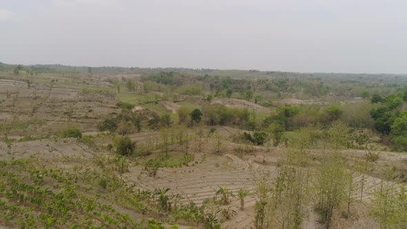 Thumbnail for Agricultural Landscape in Indonesia