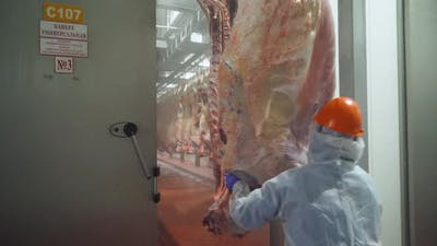 Meat Production and Food Industry Worker Moves a Suspended Beefs Carcass to a Warehouse Meat