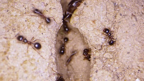 Animal Insects Ants On Soil 2