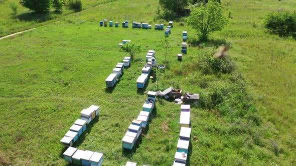Rows of beehives in nature