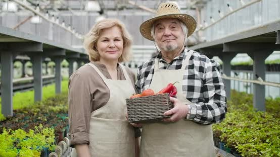 Thumbnail for Portrait of Two Professional Agronomists Holding Basket with Organic Fresh Vegetables. Senior Man