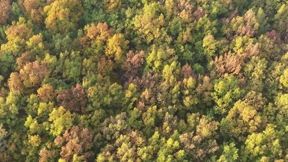Bunte Waldbaumkronen langsam absteigend 4K Luftbild