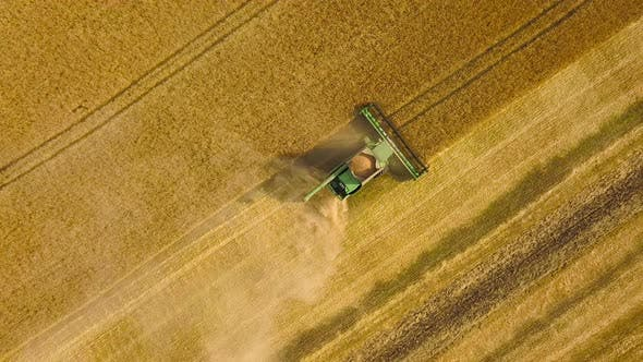 Thumbnail for Top View Combine Harvester Gathers the Wheat at Sunset, Harvesting Grain Field, Crop Season