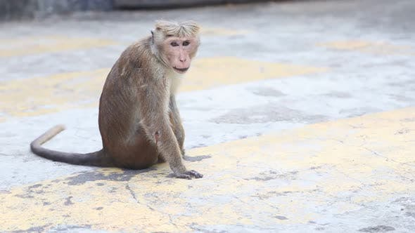 Monkey running away from a dog in the Golden Temple of Dambulla