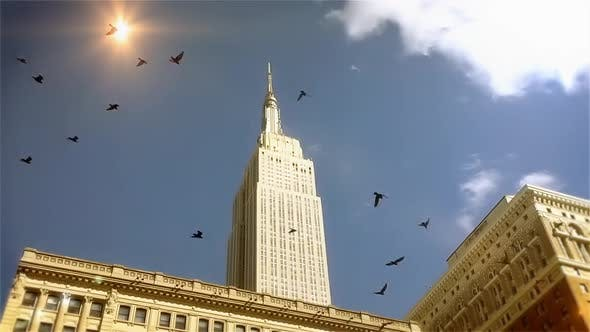 Thumbnail for Flock of Birds Flying in the Sky near the Empire State.