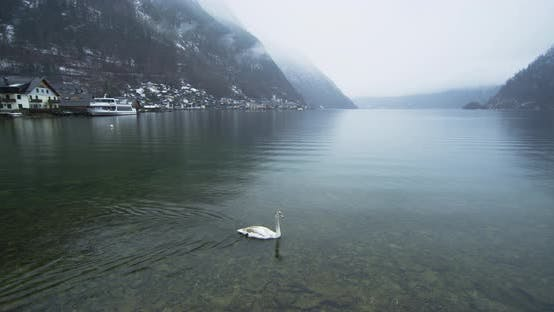 Thumbnail for Hallstatter See with swans