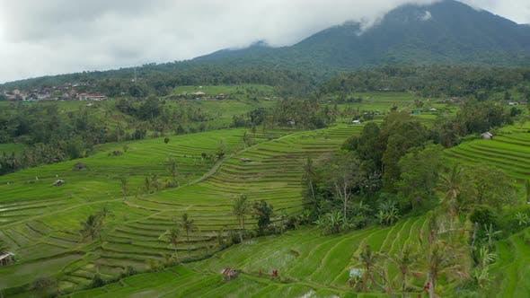 Rice Field Plantations on Terraced Green Hills in Bali