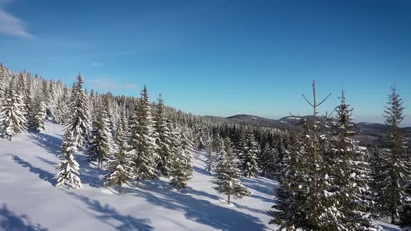 Thumbnail for Snow Covered Winter Forest in the Mountains