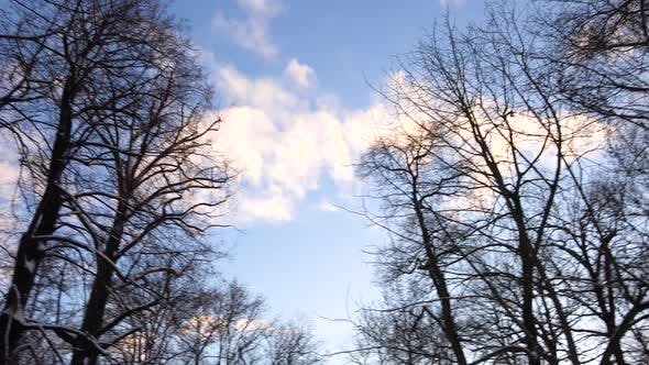 Thumbnail for A View of Leafless Tall Trees Covered with Snow and a Sunny Sky with a Few Clouds.