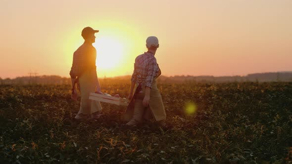 Two Farmers Carry a Heavy Box with Vegetables Across the Field