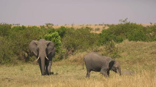 Elephant and calf in Africa
