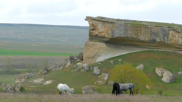 Thumbnail for Horses graze on the field under the slopes of the cliff
