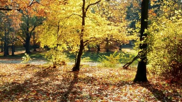 Thumbnail for Leaves Falls From Trees in Autumn Forest