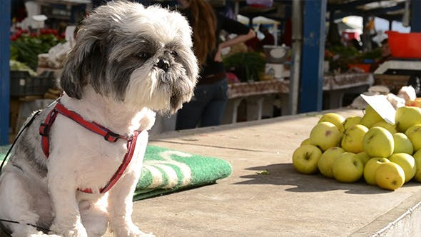 Thumbnail for Dog and Apple Stack  at Market