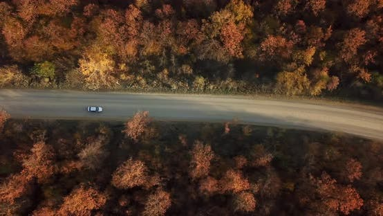 Thumbnail for Aerial Top Down View of Road Between Autumn Forest Trees