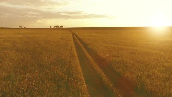 Sporty Child Runs Through a Green Wheat Field