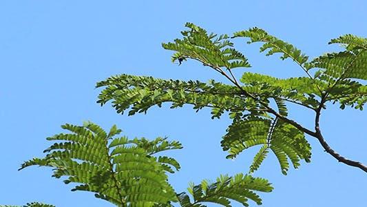 Thumbnail for Blue Sky Green Leaves