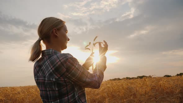 Thumbnail for The Farmer Looks at the Wheat Ears, Stands in the Field at Sunset