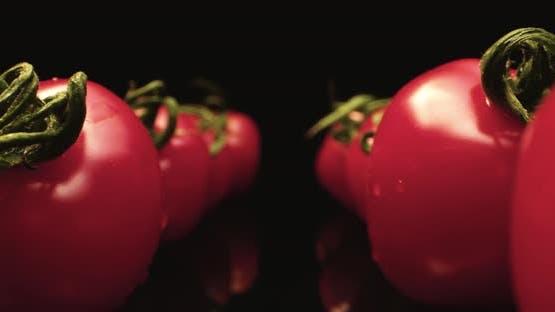 Tomato fly by macro