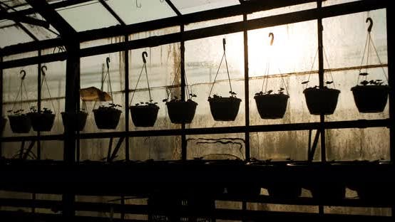 Thumbnail for Potted Plants On Table In Greenhouse
