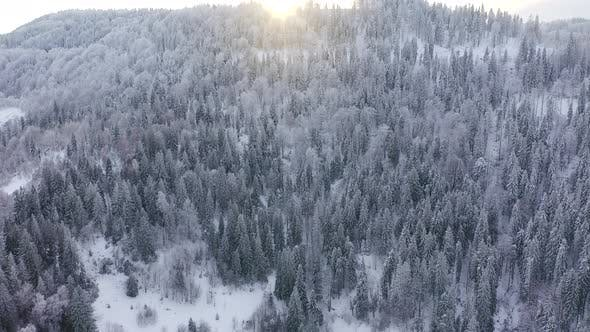 Aerial View of Snow Covered Trees in the Mountains in Winter