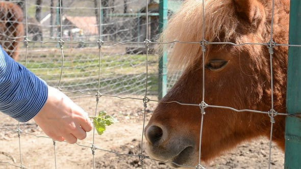 Thumbnail for Starved Pony is Fed