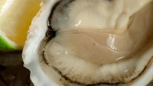 The Oyster with a Piece of Lime Rotates.