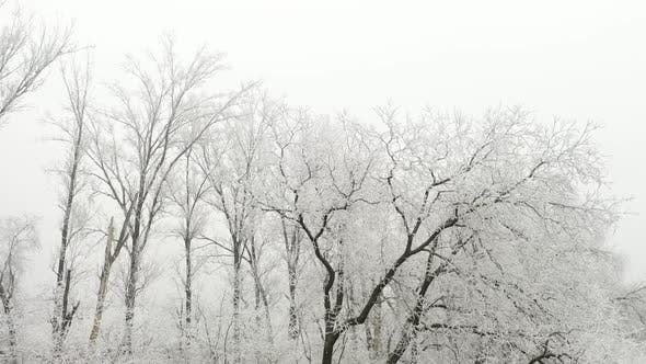 Black Trees in a White Fog