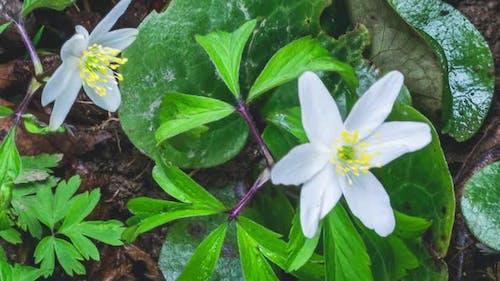 Detail Fresh Wild Spring Flowers Bloom in Green Nature Growing