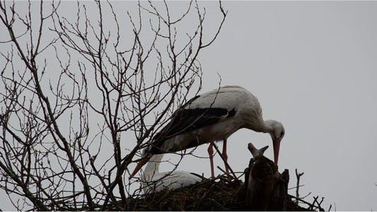 Thumbnail for Stork 2