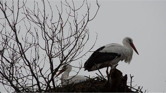 Thumbnail for Stork 3