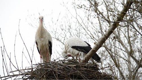 Stork 9