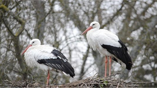 Thumbnail for Stork 10