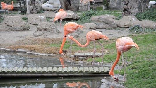 Thumbnail for Flamingo 2
