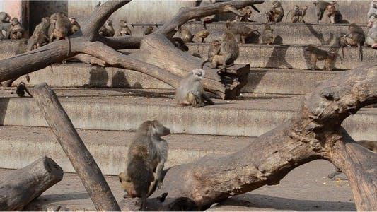 Thumbnail for Monkey