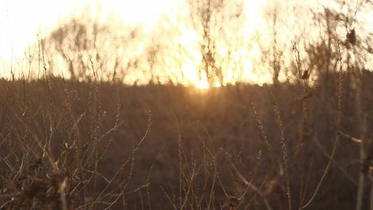 Thumbnail for Bush Branches And Sunshine Bokeh